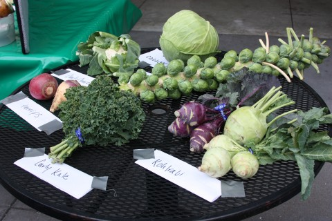 Vegetables in the Brassica family.
