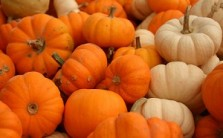 pumpkins vista wallpaper