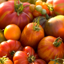 heirloom tomatoes mary crimmins