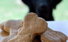 dog treat th